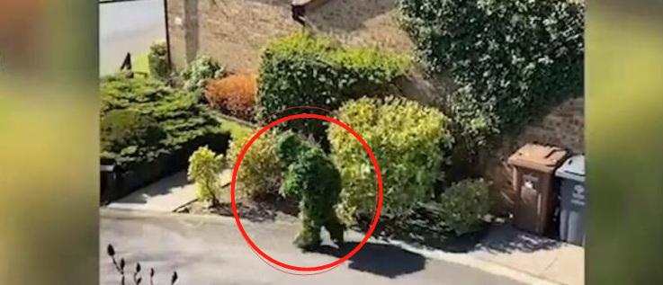 奇葩!男子假扮灌木丛溜出门,摸爬滚打躲监控
