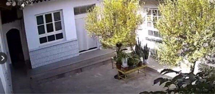 究竟摄像机记录下了老家院子里什么神奇的时刻?