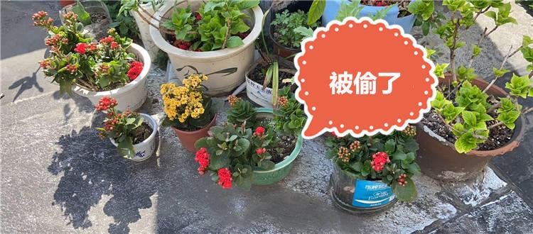 直到邻居家门口的花被偷,才意识到…...