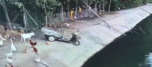 爆笑!三轮车被推下水,没想到真凶竟然是...