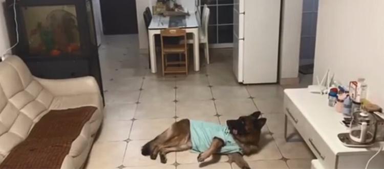 狗狗在家开门收快递,网友调侃:您的快递已被狗签收