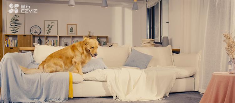 宠物独自在家时会做什么......看完眼圈红了