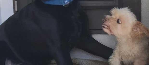 空旷的屋子里,狗子突然惊慌逃窜,主人调监控后直接笑喷
